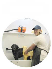 Bakersfields natural pet food and self serve dog wash pet wash solutioingenieria